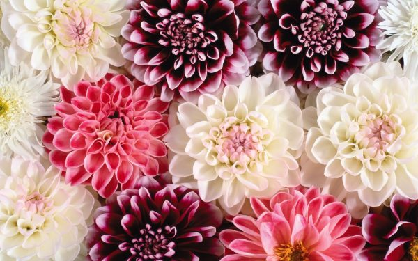≫Curso Floricultura SENA