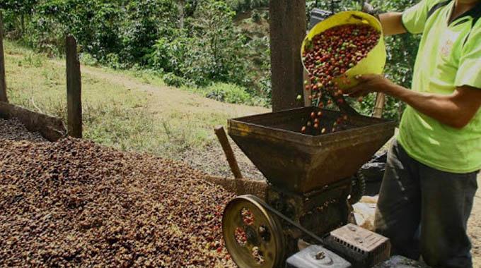 Produccion de Café